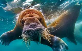 Флора и фауна Северного Ледовитого океана