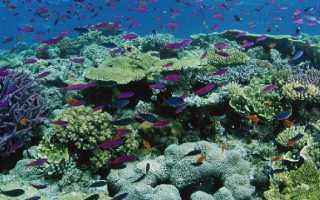 Рельеф дна индийского океана и его особенности
