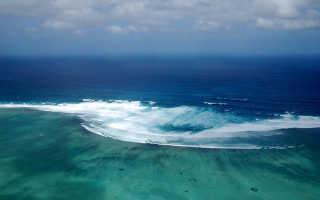 Растения и обитатели Индийского океана