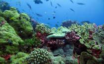 Животные и растения Тихого океана