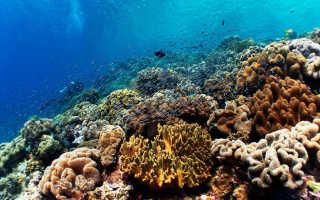 Месторождения и отложения минеральных ресурсов Тихого океана