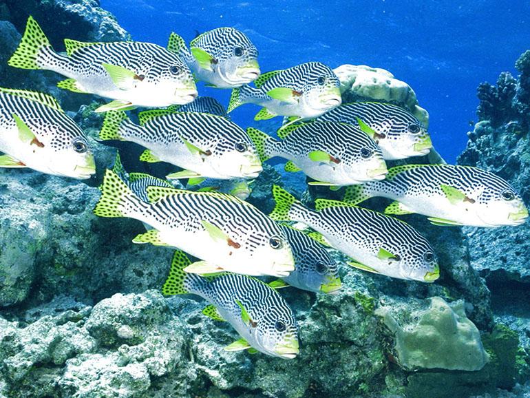 Промысловая рыба