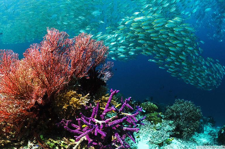 Природа Тихого океана