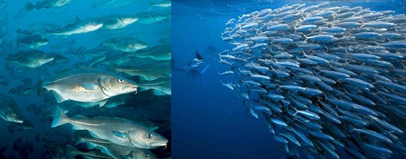 Рыбы в океане