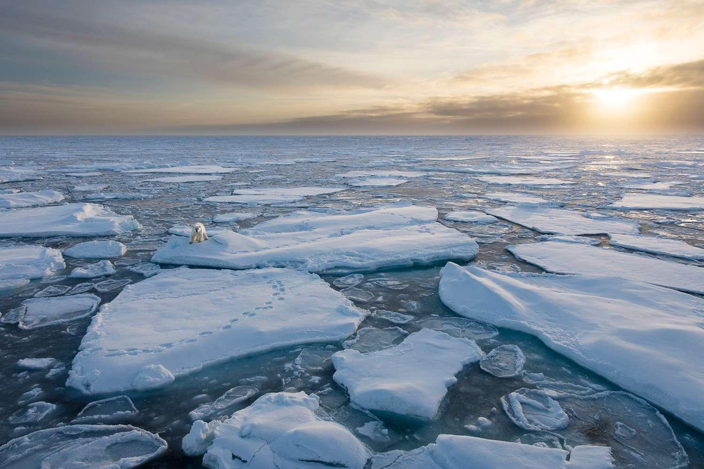 момент северный ледовитый океан картинки выглядит новая грудь