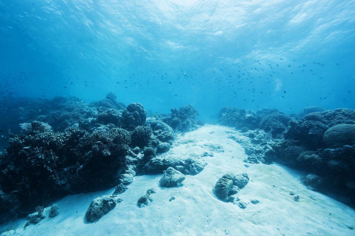 интересным океан фотографии под водой районе часа вызвал