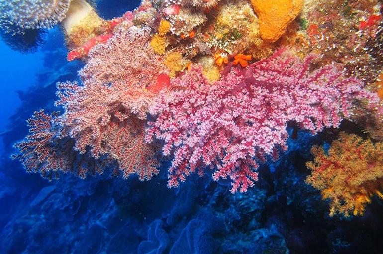 Коралловое