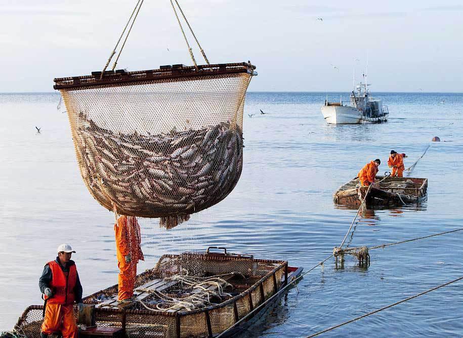 Рыбный промысел в Тихом океане