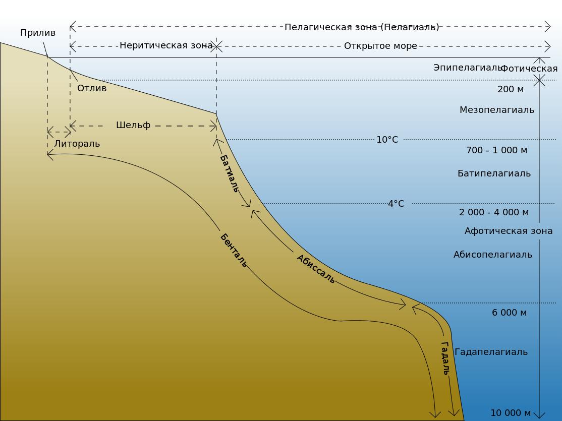 Зоны океана