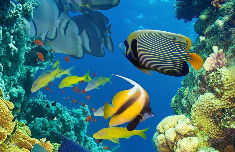 Органический мир Атлантического океана